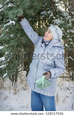 Collecting cones for medicinal purposes in the winter forest