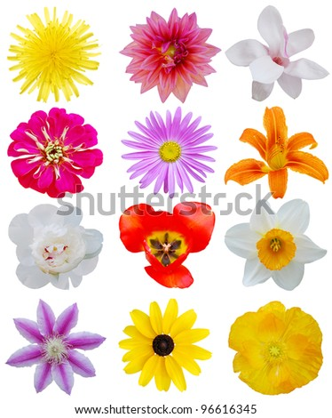 Collecting in spring flowers - stock photo