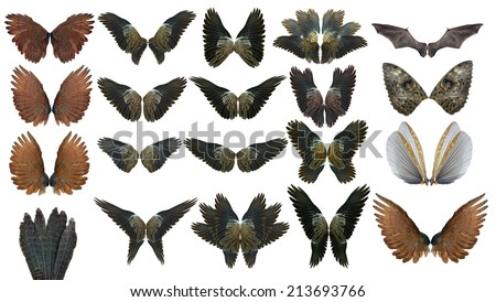 collection animal  Pinion on the sprawling white - stock photo