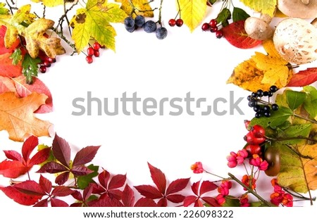collection beautiful colorful autumn leaves and berries isolated on white background  - stock photo