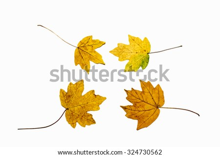 collection beautiful colorful autumn leaves isolated on white ba - stock photo