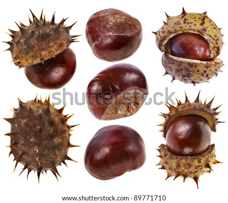 collection Chestnuts close up macro detail isolated on a white background - stock photo