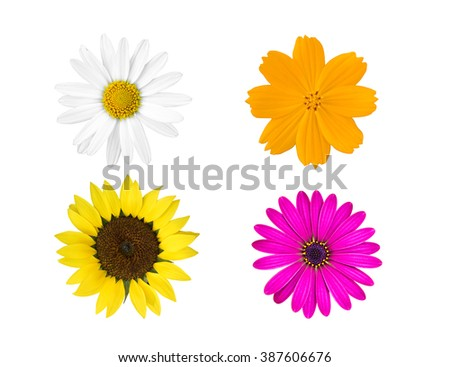 collection colorful flowers isolated on white background.  - stock photo