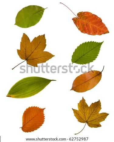 collection different autumn leaves isolated on white background - stock photo