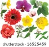Collection flowers isolated on a white background. - stock photo