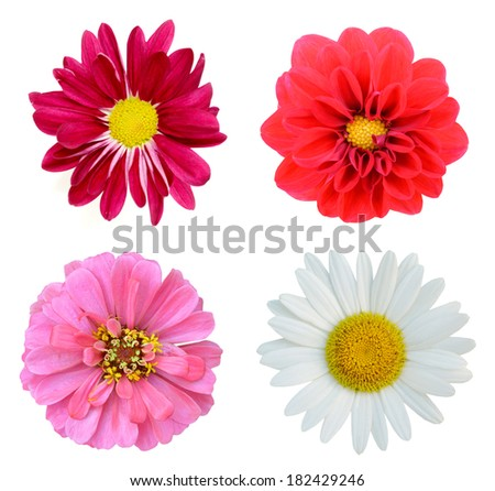 Collection gardening flowers - stock photo