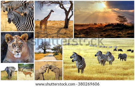 collection images from different animals taken during a safari in Africa    - stock photo