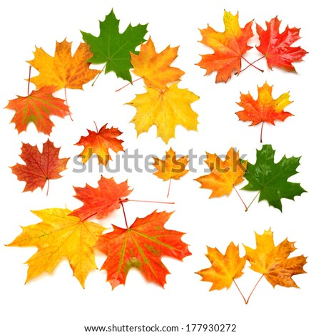 Collection of autumn leaf isolated on white background