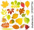 Collection of autumn leaves - stock photo