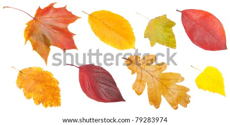 collection of autumn leaves, isolated on white background - stock photo