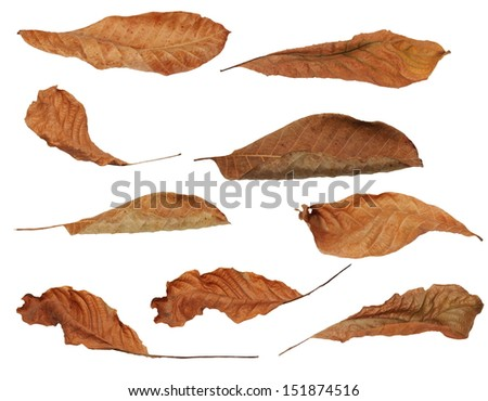 Collection of autumn leaves isolated on white with clipping path (high resolution) - stock photo