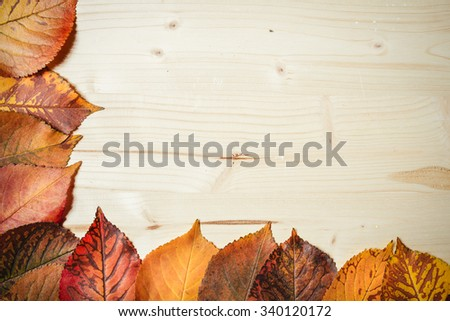 Collection of autumn leaves on wooden background - stock photo