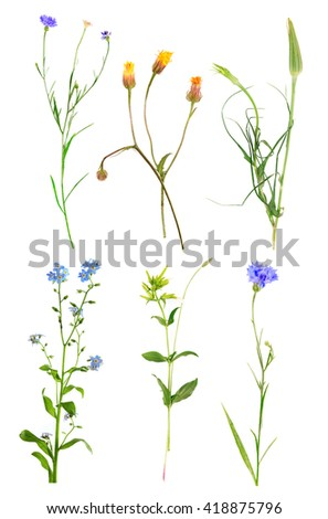 Collection of beautiful meadow flowers, isolated on white - stock photo