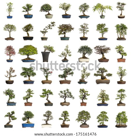 Collection of bonsai trees, isolated on white - stock photo
