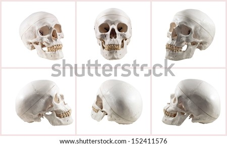 Collection of brain and skull isolated - stock photo