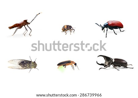Collection of Bug (Insect) isolate on white - stock photo