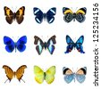 collection of butterflies on a white background in high definition - stock photo