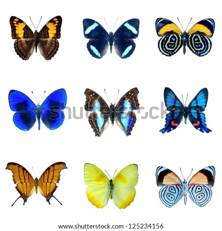 collection of butterflies on a white background in high definition