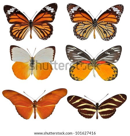 Collection of butterfly isolated on white - stock photo