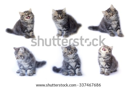 collection of cat isolated on white background - stock photo
