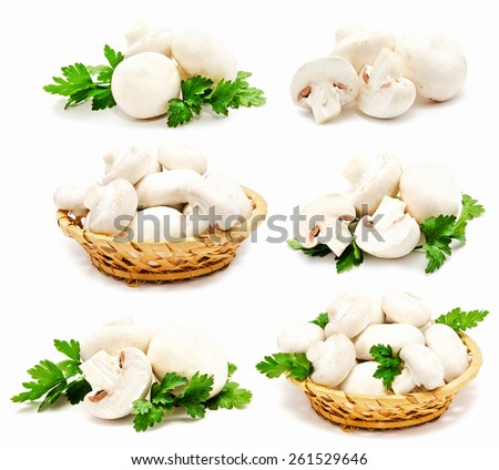 Collection of champignon mushroom white agaricus isolated on a white - stock photo