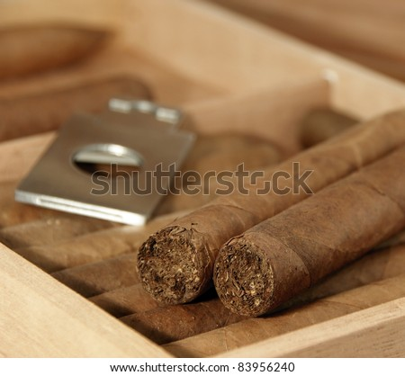 Collection of cigars in open humidor. Close-up. - stock photo