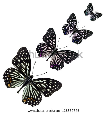 Set Colorful Art Butterflies On White Stock Vector 646730821 ...