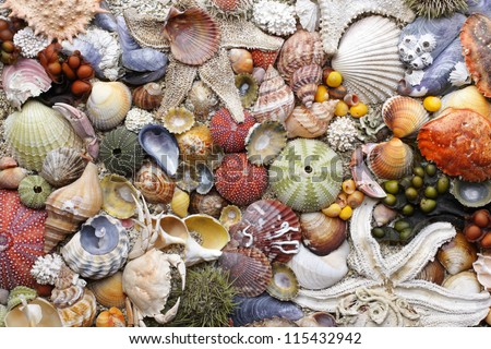 Collection of colorful empty seashells, picked at Norwegian coast. Closeup, daylight. - stock photo