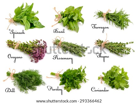 Collection of cooking herbs and spices. Isolated on white background. - stock photo