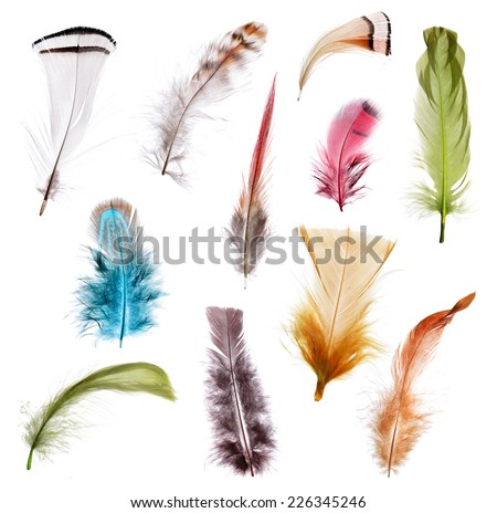 Collection of different color feathers. Isolated on white background. - stock photo