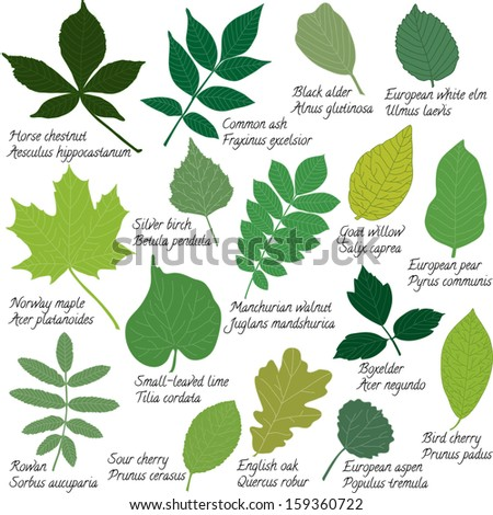 Collection of different leaves isolated on white. Raster version.