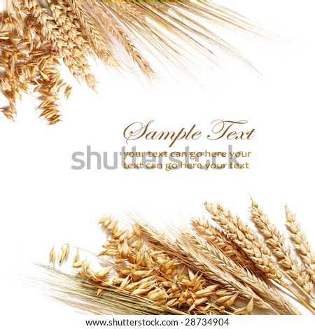 Collection of different wheats isolated on white. - stock photo