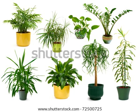 Collection of eight different studio-isolated shots of gorgeous indoor plants - stock photo