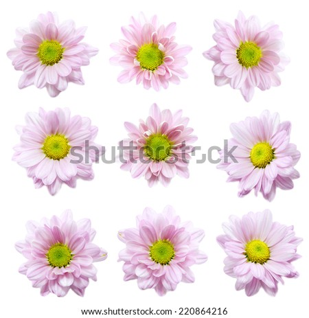 Collection of Flower on white background - stock photo