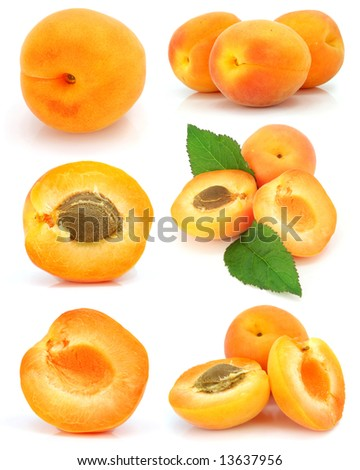 collection of fresh apricot fruits isolated on white background - stock photo