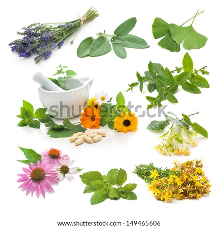 Collection of fresh medicinal herb on white background - stock photo
