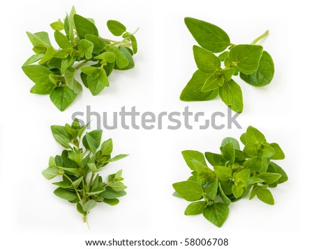 Collection of fresh oregano isolated on white background - stock photo