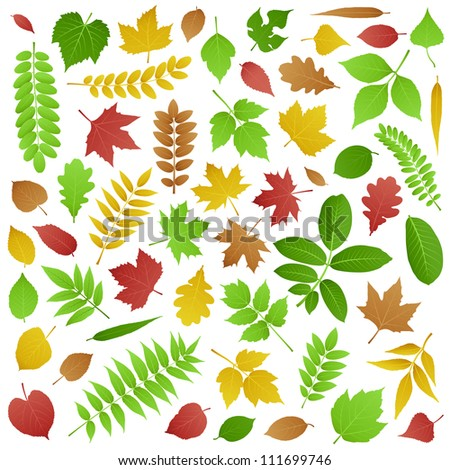 Collection of Green and Autumn Leaves - stock photo