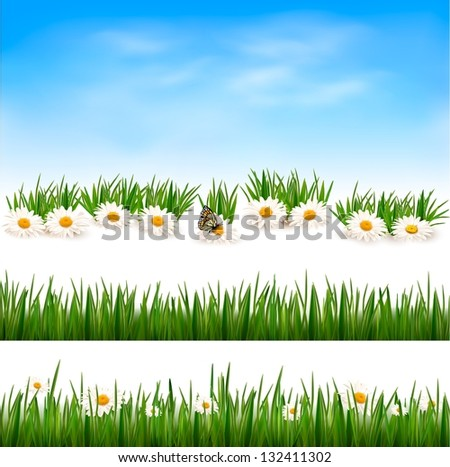 Collection of green grass backgrounds.  Raster version of vector - stock photo