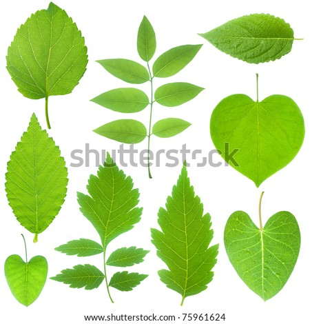 collection of green leaf - stock photo