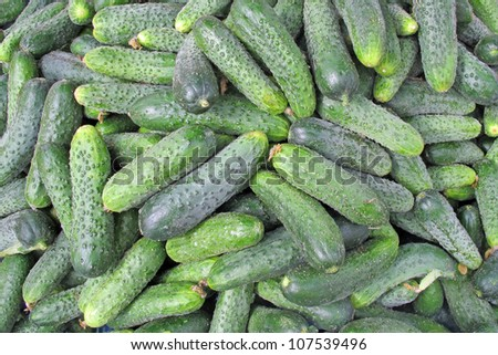 collection of Greens cucumbers for sale at vegetable market