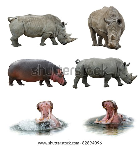 Collection of hippos and rhinos - stock photo