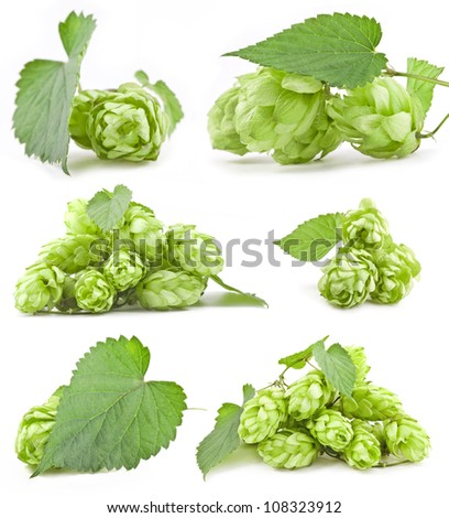 Collection of Hops isolated on a white background - stock photo