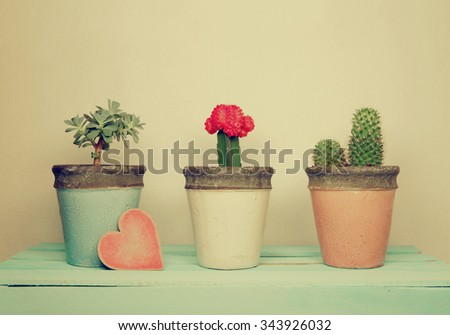 collection of houseplants with wooden  heart