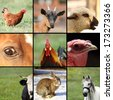 collection of images with animals from the farm - stock photo