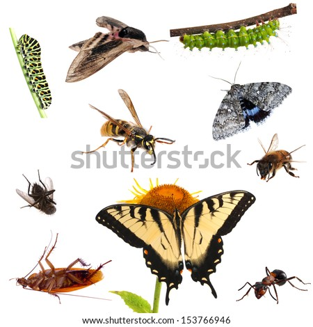 Collection of insects. Butterflies, caterpillars, moths, bees, ants etc. - stock photo