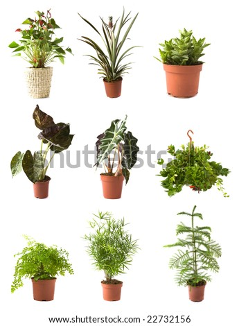 Collection of isolated flowers in a pot - stock photo