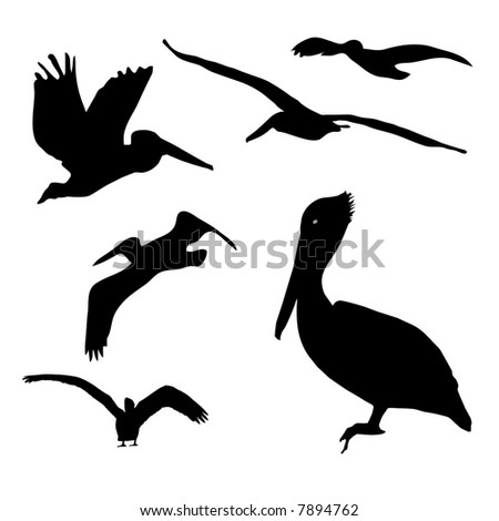 Collection of isolated Pelican silhouette designs.