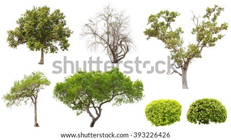 Collection of isolated tree and bush on white background - stock photo