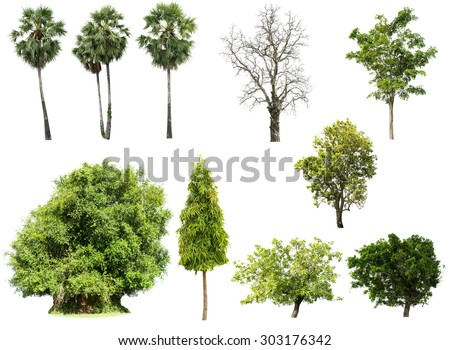 Collection of isolated tree on white background in high definition - stock photo